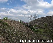 Vegetation auf der Zirkelschachthalde
