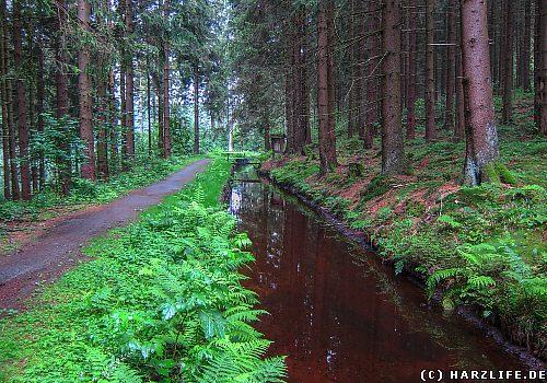 Der Wanderweg am Dammgraben