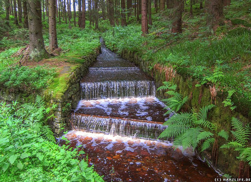 Die Wiege des Dammgrabens