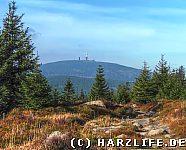 Blick von den Hohneklippen zum Brocken