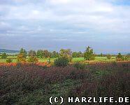 Landschaft Salza - Alte Söse