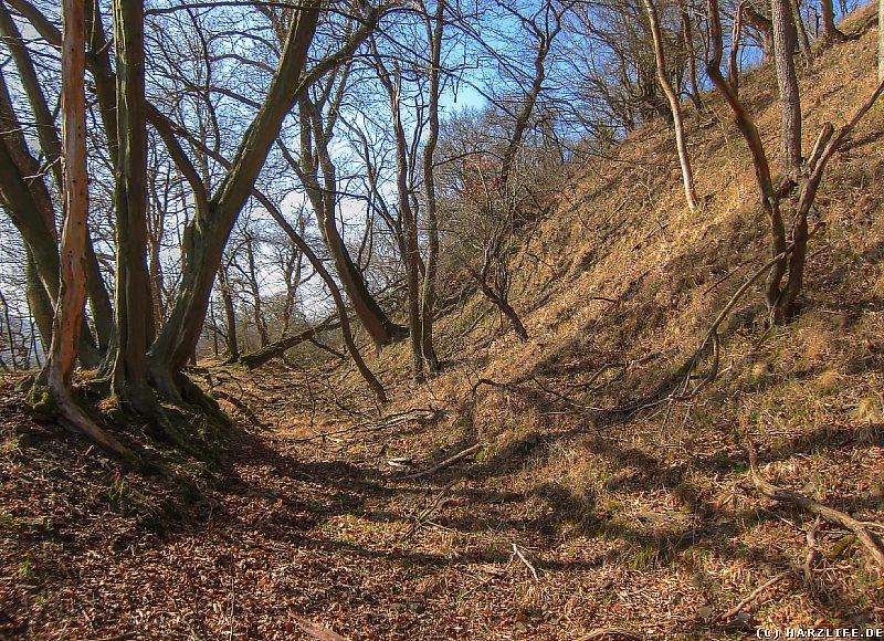Der Burggraben an der Südseite der ehemaligen Burg Alter Falkenstein