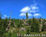 Windbruch Neuer Wald