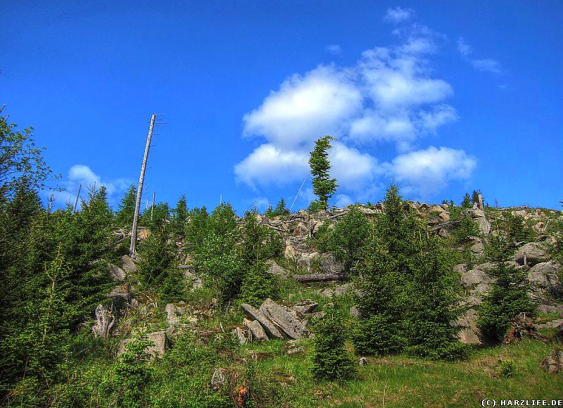 Windbruch und neuer Wald