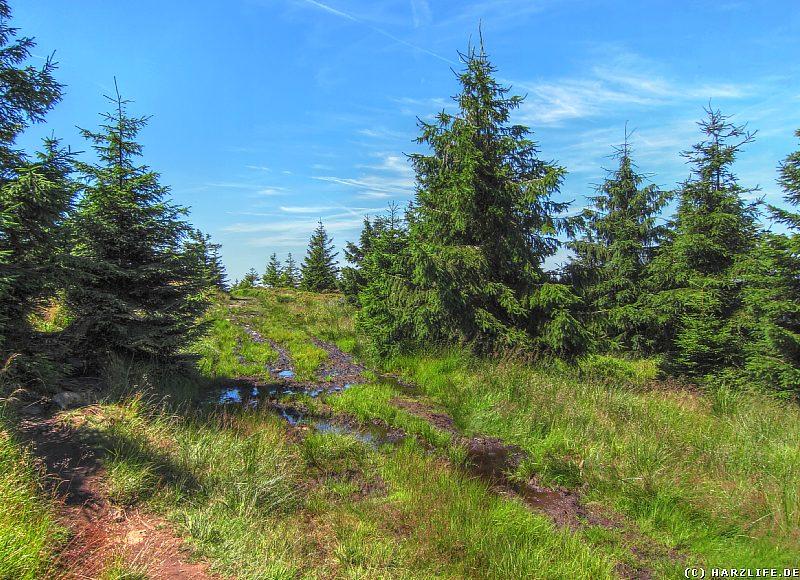 Der Reitstieg auf dem ''Acker'' im Harz