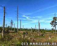 letzte Zeugen des Waldsterbens