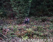 Ein Bär am Waldrand