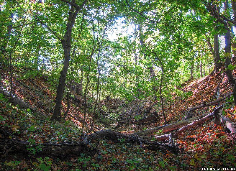 Burgruine Grillenburg - Der Burggraben zwischen der Vorburg und der Kernburg