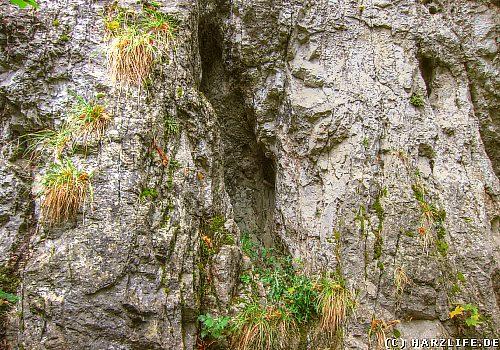 Felsspalte im Hübichenstein