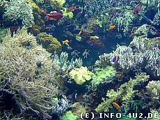 Hintergrundbild Unterwasserlandschaft