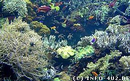 Wallpaper Unterwasserlandschaft
